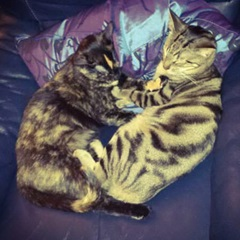 Tigris y Angelina(Keira)